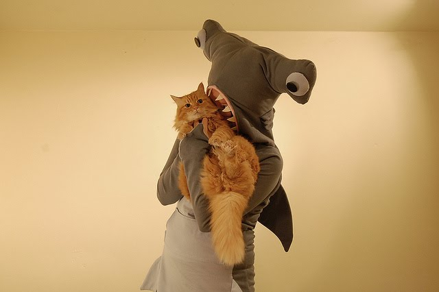 person in shark costume pretending to eat a cat