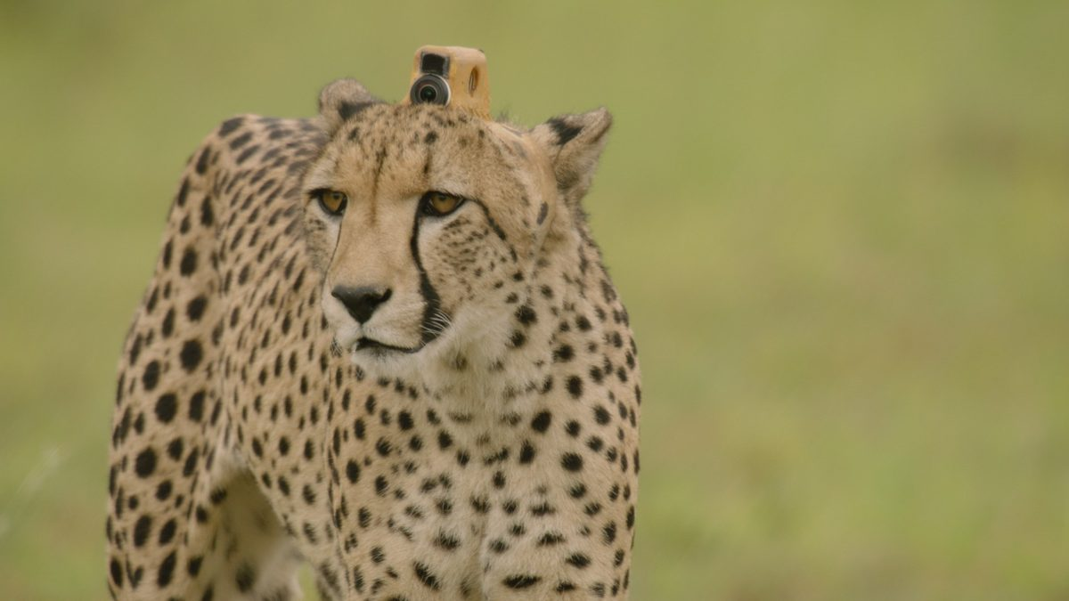 Animals with Cameras, A NATURE Miniseries
