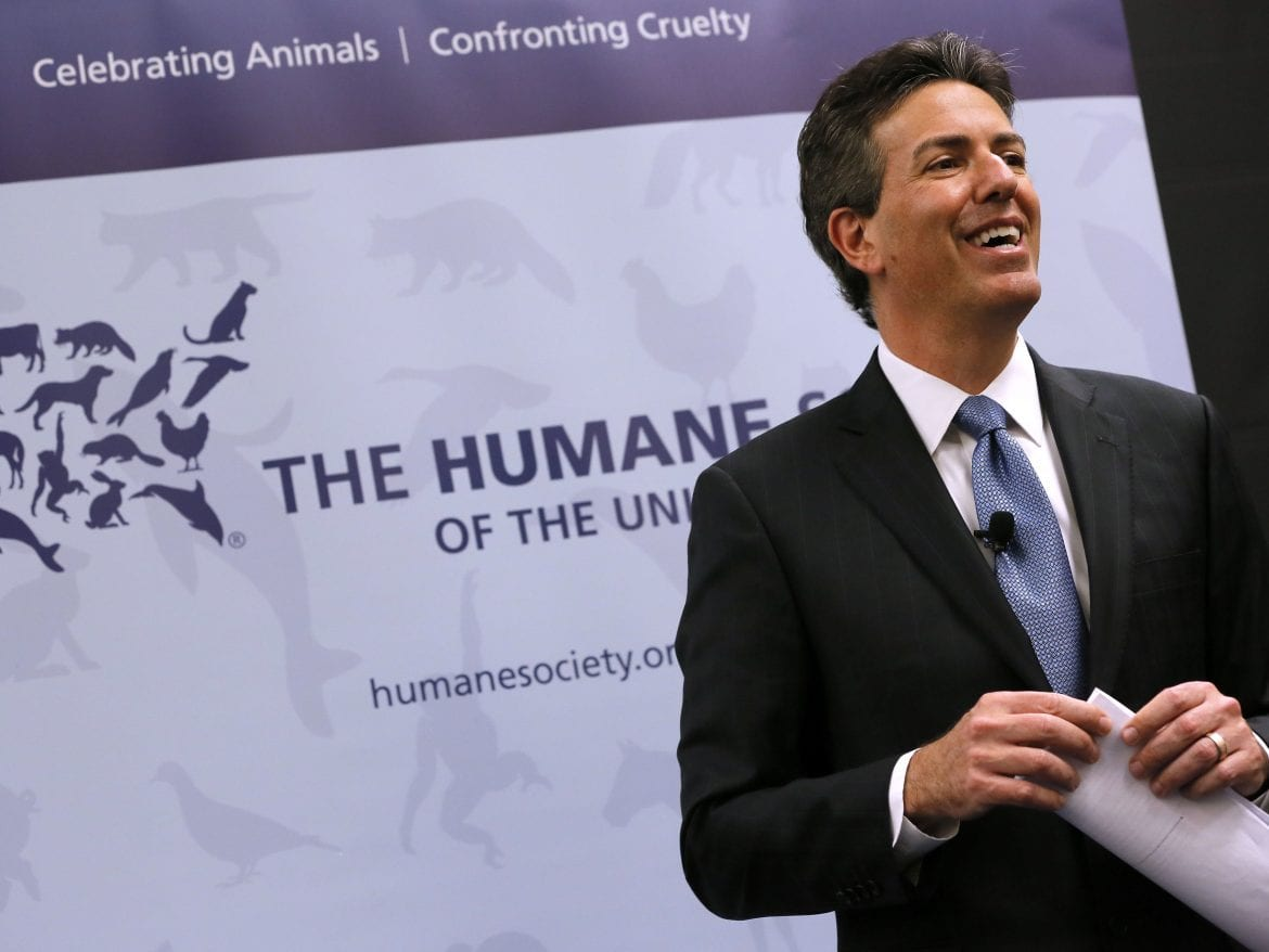 Wayne Pacelle Allegations Immediate 7 to Stop Humane Society Board