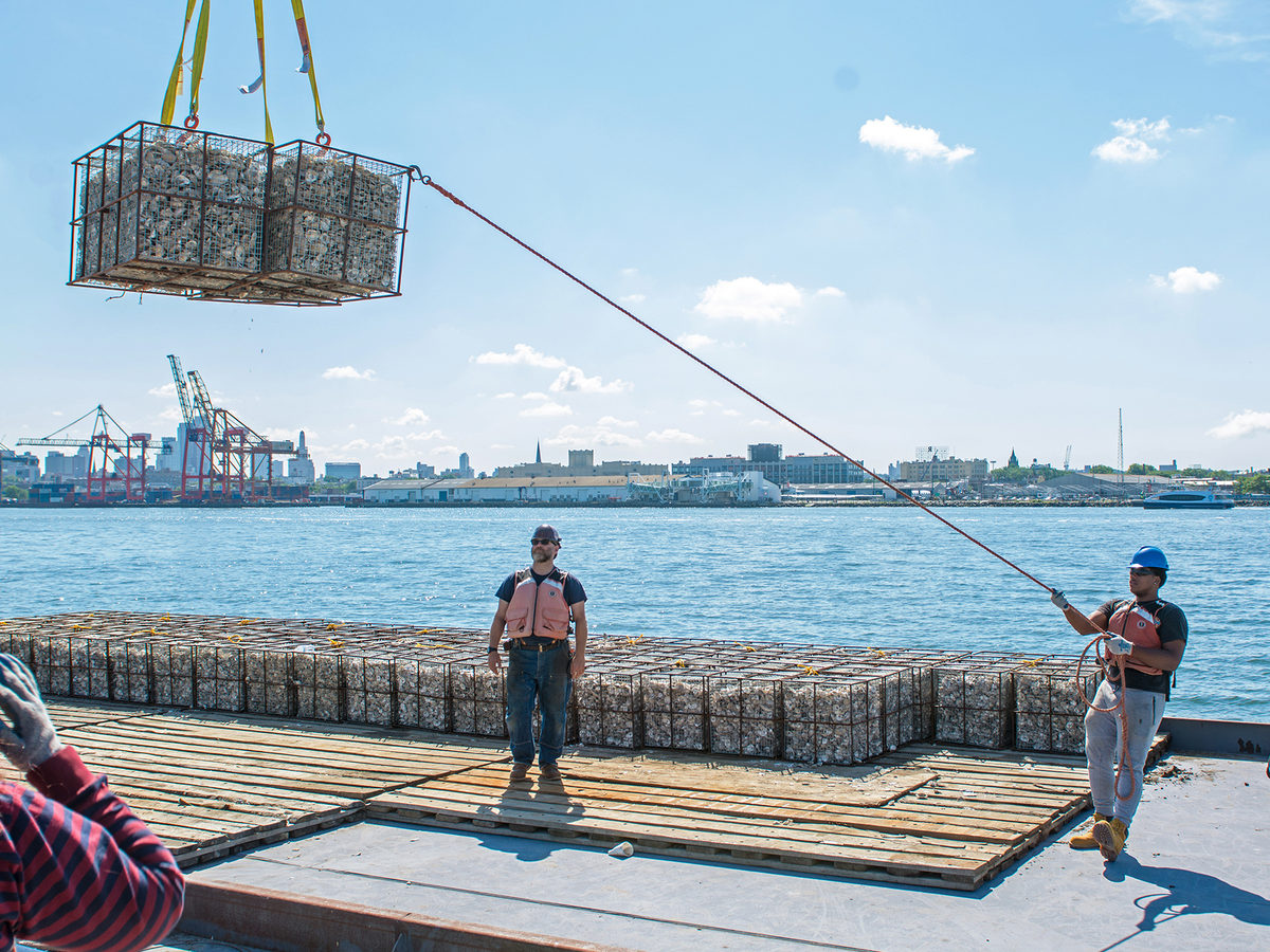 Randall Clarke Dennis, left, an instructor at the Harbor School, watches students Timothy Morrison, middle, and Lijasad Maxwell, right, as they send 422 oyster reef structures into the Hudson River.