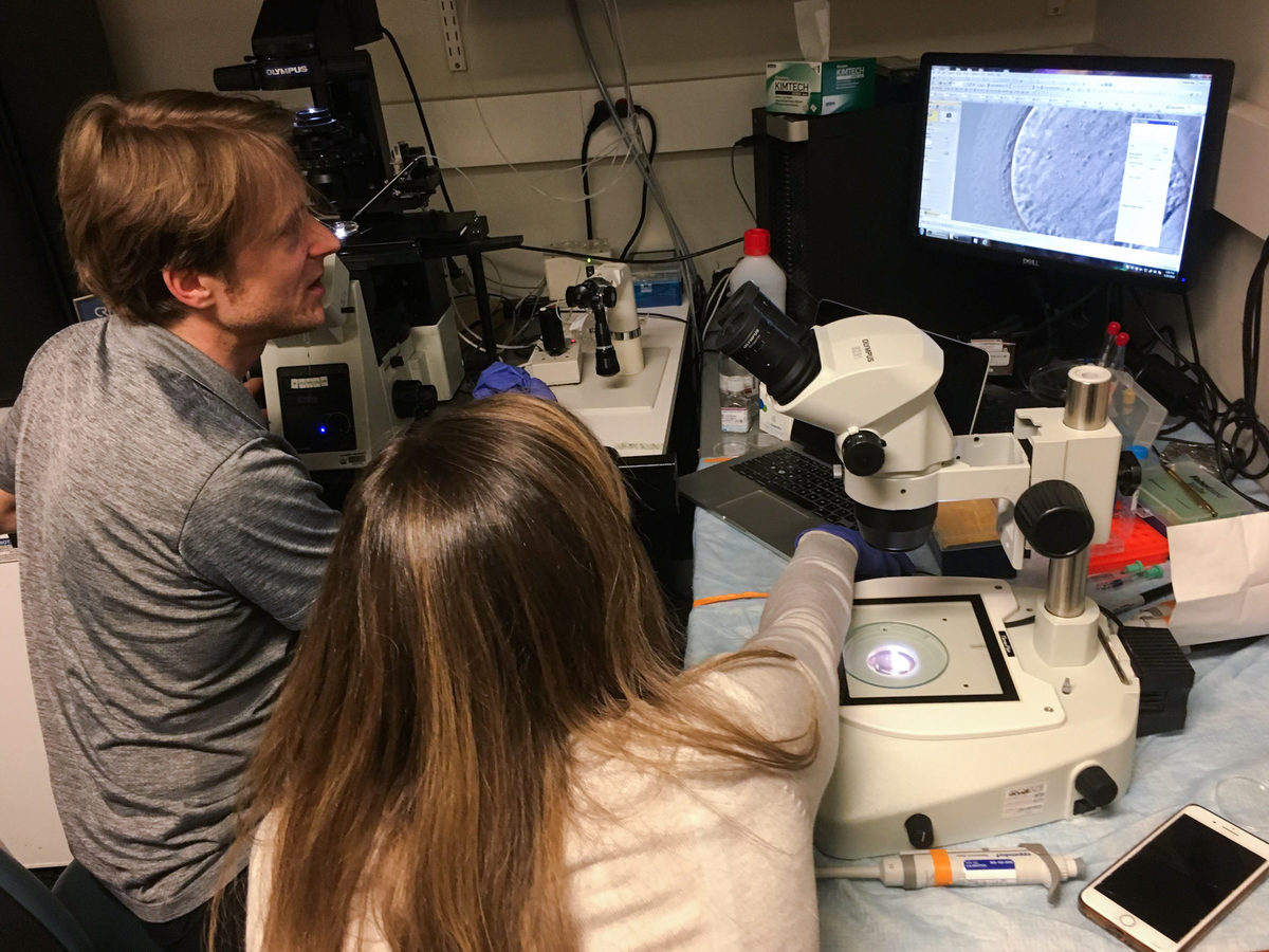 Dieter Egli, a developmental biologist at Columbia University, and Katherine Palmerola examine a newly fertilized egg injected with a CRISPR editing tool.