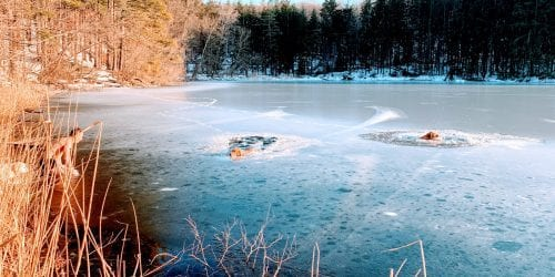 New York Man And His Golden Retriever Rescue 2 Dogs From Icy Lake