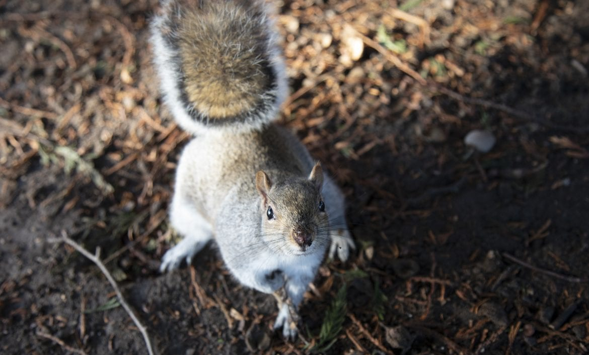 The Other Twitterverse: Squirrels Eavesdrop On Birds